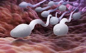 آنالیز اسپرم