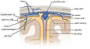 آنالیز مایع مغزی نخاعی