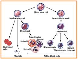 شناسایی عوامل قارچی در نمونههای بالینی به روش ایمونوفلورسانس