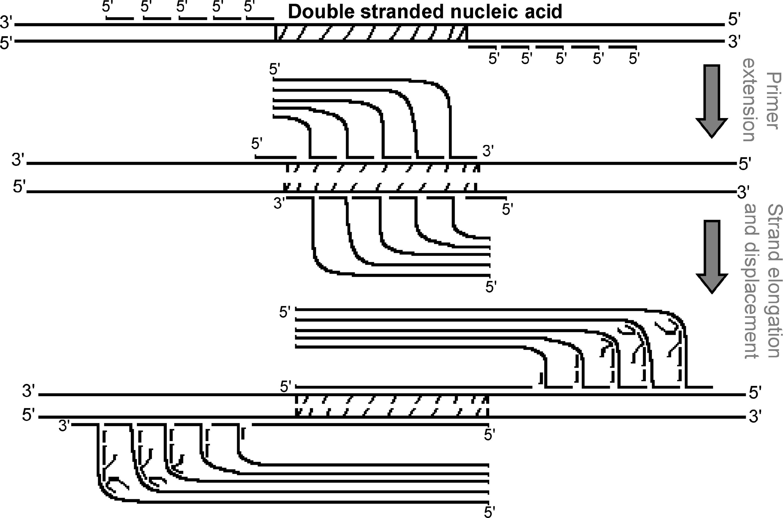 اسید نوکلئیک